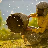 ארץ הדבש