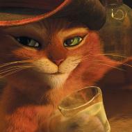 החתול של שרק