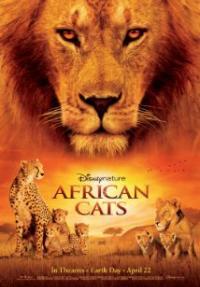חתולים אפריקאים - כרזה