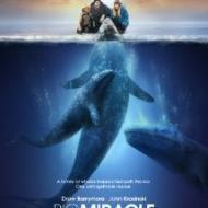 כולם אוהבים לוויתנים
