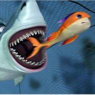 יצאת כריש